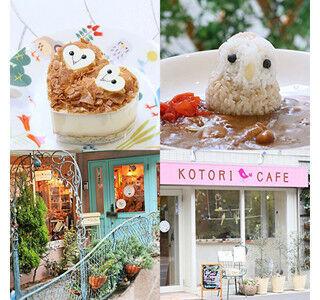 ことりカフェに、メンフクロウをモチーフにしたカレーやケーキが登場!
