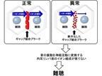 順天堂大など、遺伝性難聴で最も多い「GJB2変異型」の原因を解明