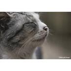 年末年始も猫づくし! 東京都や大阪府など各地で岩合光昭の写真展開催