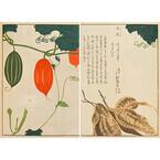 東京都・京橋で江戸時代の「薬草」に焦点を当てた展覧会