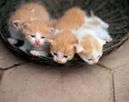 猫専門の獣医師が「猫に好かれるコツ」をじっくり解説してみた