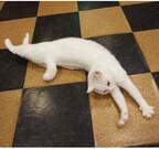猫が7匹もいる美食宿、それぞれが個性的! - 伊豆「オーベルジュ はせべ」