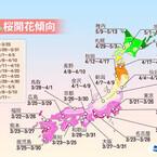 東京都が全国で最初に開花!? 桜の開花傾向発表