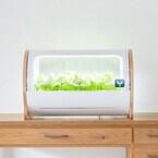 大手デバイスメーカーが家庭用水耕栽培機の製造・販売に参入! その狙いは?