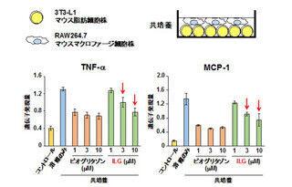 生薬甘草成分に内臓脂肪の炎症抑制効果 - メタボ治療薬開発へ期待