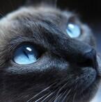 猫も家族に好きな人ランキングをつけるの?