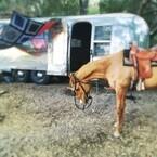 チャニング・テイタム、誕生日プレゼントの馬に大感激
