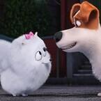 『ペット』主役犬に思い寄せるポメラニアンの写真公開! ツンデレ受け答えも
