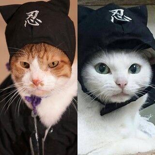 『猫侍』主役猫が『猫忍』に友情出演! あなご&金時の写真42枚公開