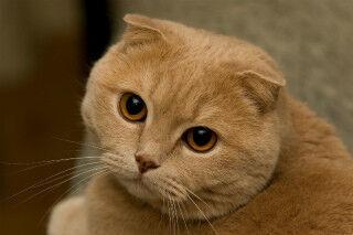飼い主は聞いた! 猫が話した言葉 -「栃木県」「ウソやろ」「あさ」