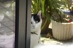 「犬は人につき、猫は家につく」っていうけど本当なの?