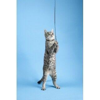猫にも利き手があるって、本当?