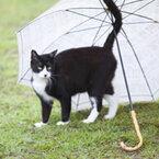 【女性編】あいあい傘を一緒にしたいキャラランキング
