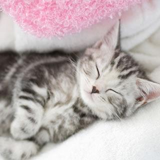【男性編】猫の日記念! マンガ・アニメに登場する猫キャラランキング