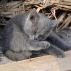 震災にも負けず - 猫が神様の島、宮城県田代島