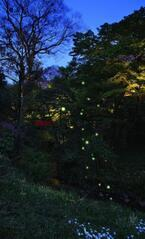 初夏の風物詩・ホタルの飛翔まではあと何℃?~「ほたるの夕べ」-椿山荘