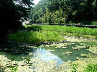 東日本最大規模のホタル観賞スポット、山梨県一色地区で祭り