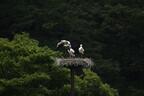 第4回「日本動物大賞」受賞が決定 -日本動物愛護協会