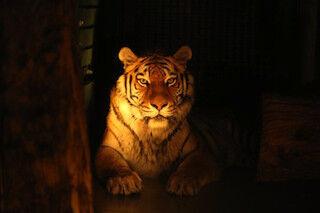 夜だけのドキドキ体験を! 夏季限定「夜の動物園」を開催-札幌市円山動物園