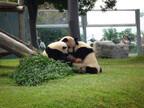 行ってよかった動物園&水族館は? ランキング2012を発表