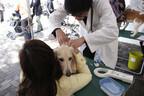 「Pet博」で「マイクロチップ無償装着会」と「保護犬譲渡会」を同時開催