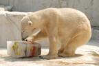 ホッキョクグマに、つめた~い氷のプレゼント! -名古屋・東山動植物園