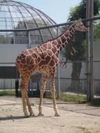やります!  夏休み期間にあえて大人向けイベントを開催 -京都市動物園
