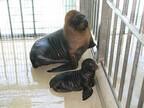 オタリアの赤ちゃんが誕生しました!  -兵庫・姫路市立動物園