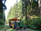 岩手県の小岩井農場で「まきばの夏休み」と題したイベントを開催中