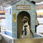 近鉄賢島駅のペンギン駅長「志摩ちゃん」退任、ペンギン列車は今年も継続