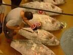 神奈川の三崎漁港の仲買人に聞いた、マグロの一番おいしい食べ方とは?