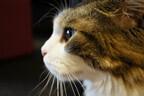 都内の猫カフェを渡り歩いてみた (2) モフモフッ! モップのような巨大猫をなでまわす -猫カフェきゃりこ【後編】