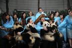 パンダの保護に関わることを熱望する「成都パンダ大使」3名募集