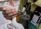 リスザルの赤ちゃん誕生!  期間限定で人工保育の様子を紹介 -海遊館
