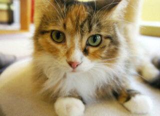 東京都・吉祥寺で開催! 猫だらけの「吉祥寺ねこ祭り2012」レポート