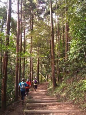 神奈川県鎌倉市で夜間走を体験できる「トレイルJOYRUN~ナイトトレイル」