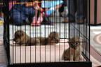 熊本県・熊本市動植物園、ライオンの赤ちゃんの公開スケジュールが決定