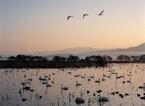 新潟県の冬の風物詩、白鳥の飛来スポットを「にいがた観光ナビ」で紹介中!