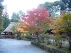 熊本県、山あいの紅葉と平家伝説の地「五家荘」で紅葉祭開催!