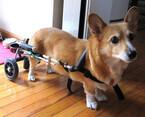 車椅子型老犬歩行介助機器「わんだふるウォーカー」発売 -ペットベリー