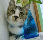 東京都井の頭公園で猫の譲渡会が開催-むさしの地域猫の会