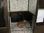 環境省が被災地で131頭の「被災ペット」を保護したと発表