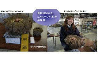 群馬県のこんにゃく芋の大きさを競う大会で、19.88kgの芋が最高賞を受賞