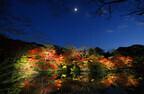 佐賀県武雄市「御船山楽園」で、紅葉のライトアップイベント開催