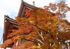千葉県成田市、紅葉の成田山公園でお茶会や演奏会など「紅葉まつり」開催