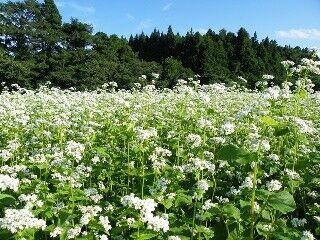 長野県茅野は信州一のそばの里。そば通もうなる八ヶ岳西麓の新そばはいかが