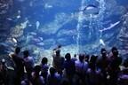 京都府民がこぞって勧める「京都水族館」は、学びながら遊べるらしい
