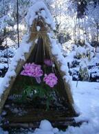 茨城県「つくば牡丹園」で冬の牡丹が咲く「冬の庭へ」が1月12日より開催