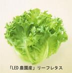 東京都・玉川大学などがLEDの光で栽培した未来のレタスが発売開始