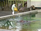 熊本県・熊本市動植物園で、ゾウにカボチャをプレゼントする冬至イベント開催